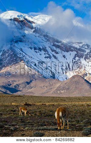 Chimborazo volcano in andean Ecuador