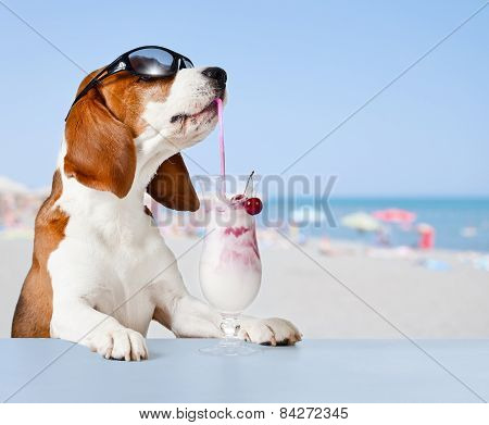 Dog In Sunglasses Drink Cocktail