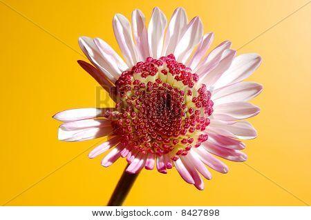droop flower