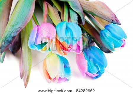 Strange multicolored tulips