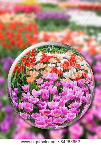 Glass sphere with various tulips in flowers field