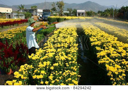 Spring Flower, Vietnam Tet, Asian Farmer