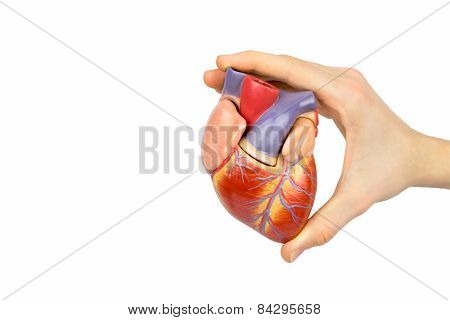 Hand holding artificial human heart model