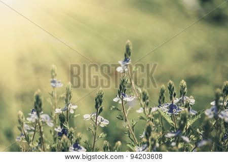 Vintage flower field on the sky. nature abstract