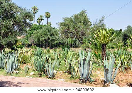 El Harti Garden