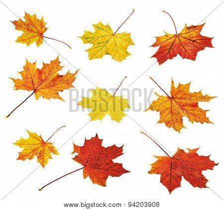 Autumn maple-leaf set isolated