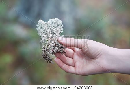 Young woman holding lichen in hand.
