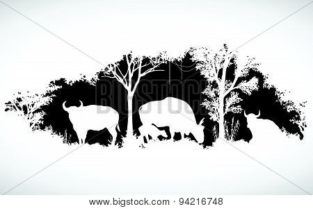 animal of wildlife is bull or gaur or wild ox  vector design
