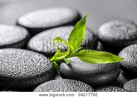 Closeup Beautiful Spa Concept Of Green Twig Bamboo On Zen Basalt Stones With Water Drops