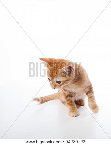 Tabby kitten looking for trouble