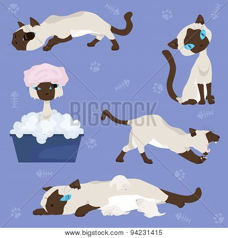 Set of illustrations - Siamese cat