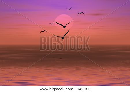 Albatross On A Sunset