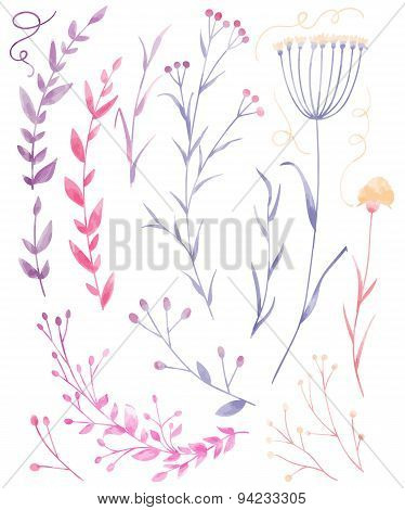 Collection Of Watercolor Plants