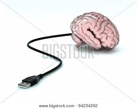 Usb Uman Brain