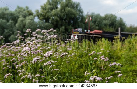 Pink Flowering Valerian Plant In A Scenic Area