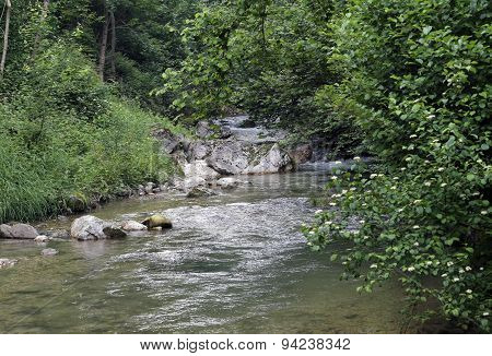Stream With Fresh Water In The Middle Of The Woods In Spring