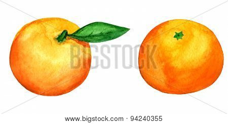 Set Of 2 Vector Watercolor Tangerines Isolated On White Background