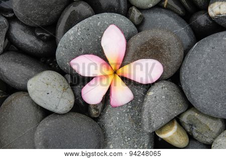 Pink frangipani and wet stones