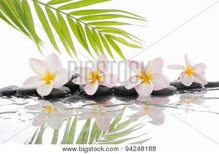 spa concept with zen stones and Frangipani and palm leaf