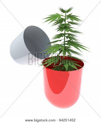 Open Pill With A Marijuana Plant