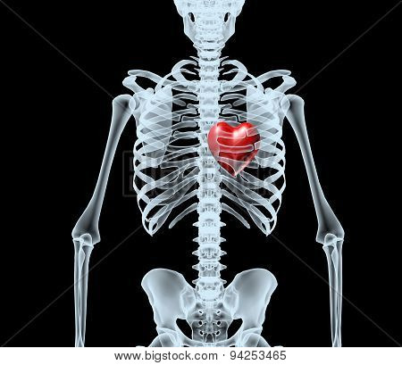 Skeleton X-ray Displaying Red Heart