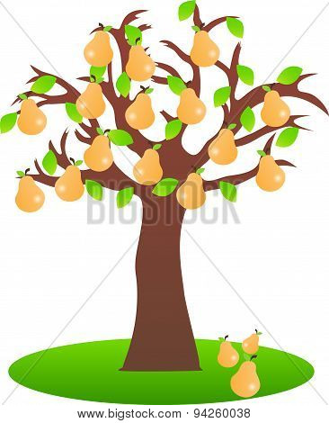 Pear tree on white background