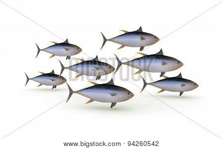 Group Of Yellowfin Tuna