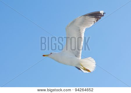 Seagull Flying High Above Sea