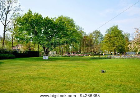 Green Field With A Tree In Keukenhof Park In Holland