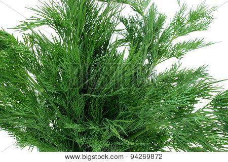 Bouquet Of Sprigs Of Fresh Dill