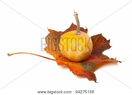 Decorative Pumpkin On Red Autumn Maple-leaf
