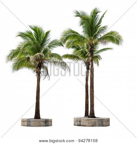Coconut Tree Group