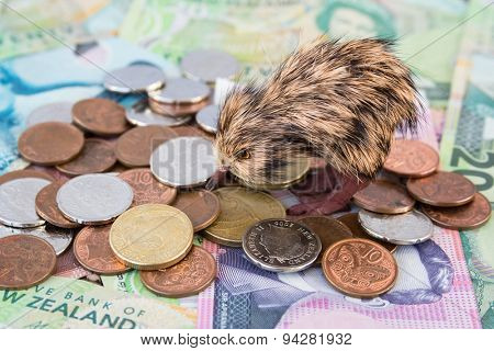 New Zealand money with Kiwi bird
