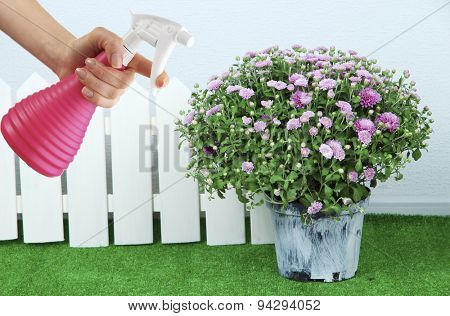 Female hand with sprayer and flowers on wall background
