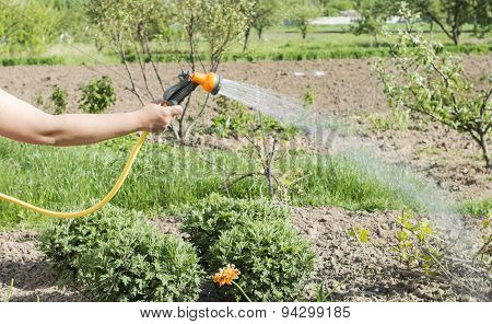 Watering Water From A Hose Of Various Plants