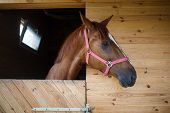 image of horse head  - Head of horse looking over the stable doors - JPG
