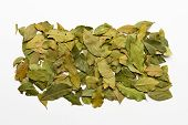stock photo of bay leaf  - Bay leaves spices and herb on white background for decorate design - JPG