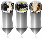 stock photo of cow head  - Three vertical metal banners with space for text head of cow inside a circle - JPG