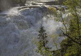 pic of murmansk  - Small spruce above a big waterfall - JPG