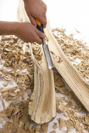 pic of hollow log  - Didgeridoo Making - JPG