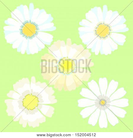 Set A Camomile As Stylized. Vector Illustration