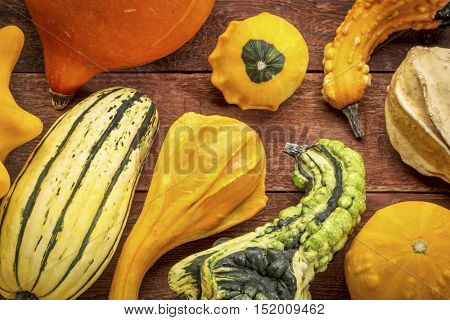 gourd and winter squash collection against rustic red painted barn wood