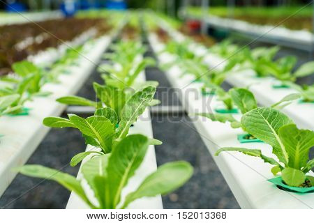 Water system in Organic hydroponic vegetable cultivation farm