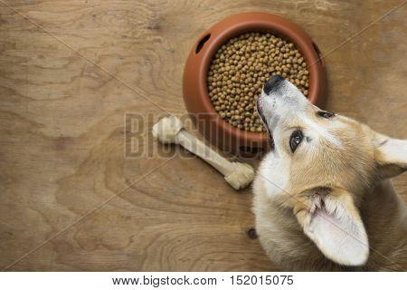A corgi dog besides a bowl of kibble food