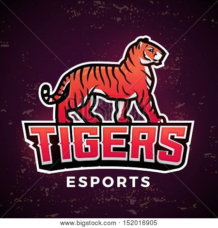 Premade tiger mascot vector. Sport logo design template. Football or baseball illustration. College league insignia, School team logotype on dark background