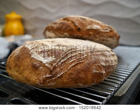 Freshly baked country rustic bread made from organic whole wheat flour