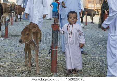 Nizwa Oman October 13th 2016: young child with a young cow