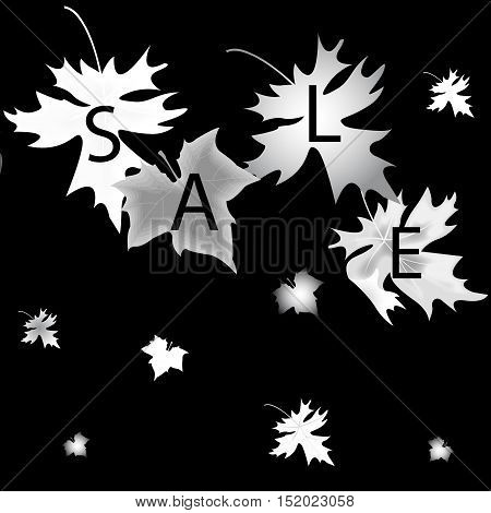Silver  Leaf Maple And Sale