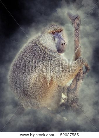 Olive Baboon In Smoke