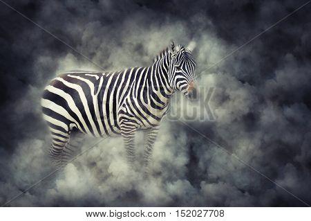 Zebra In Smoke